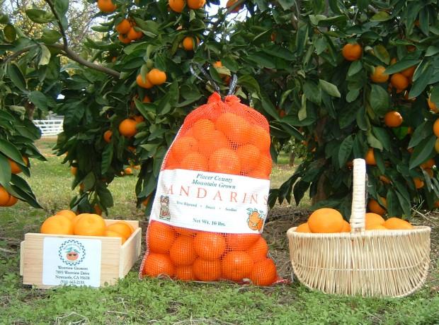 Bags-baskets_of_mandarins_003